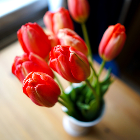 flourished: A bouquet of tulips in a flower vase