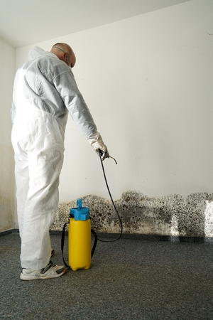 specialist during combat mold in an apartment Standard-Bild