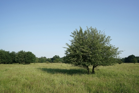 individually: single tree on a meadow in the park