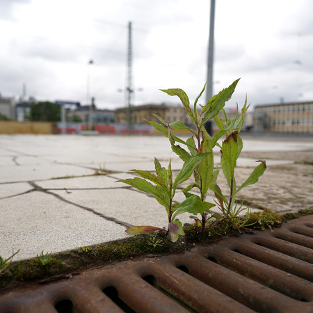 struggle for survival of a plant on a railway platform in Magdeburg Stock Photo