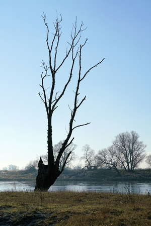 deed: Dead tree on the banks of the river Elbe near Lostau