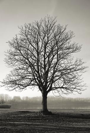 Single chestnut tree on a meadow in autumn