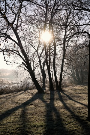 Sunrise in the city park of Magdeburg