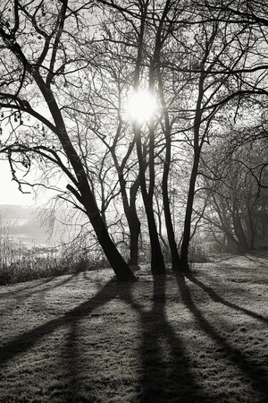 citypark: Sunrise in the city park of Magdeburg
