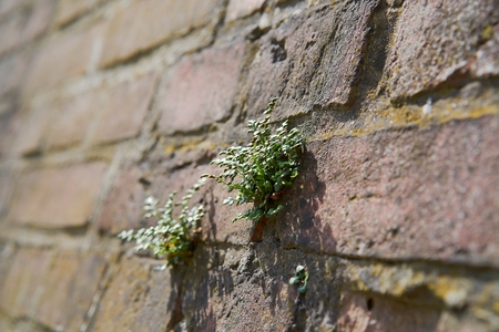 plant on a wall Stock Photo