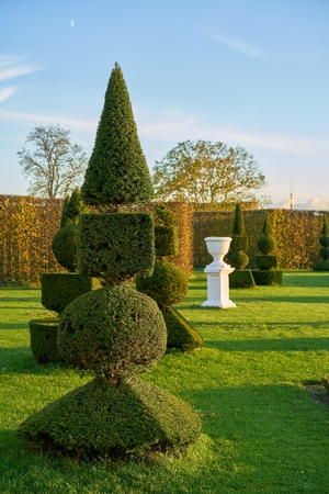 Box trees in a public baroque landscape park at Hundisburg in Germany
