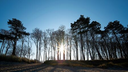 Coastal forest on the shore of the Baltic Sea near Warnemünde in Germany