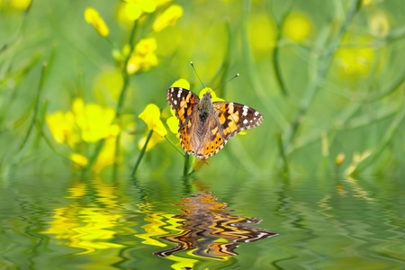 Butterfly at the river sitting on a yellow flower Stock Photo - 12871705