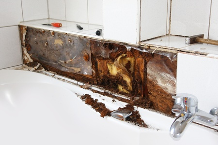Water damage in bathroom Moldy wood and wool behind the tiles photo
