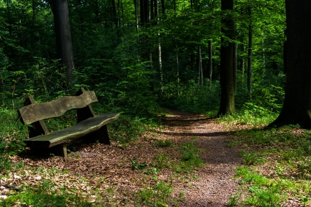wood tick: Wooden bench on a narrow forest path