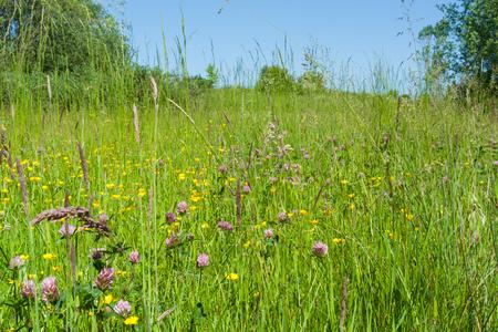 Juicy green flower meadow in the summertime Stock Photo