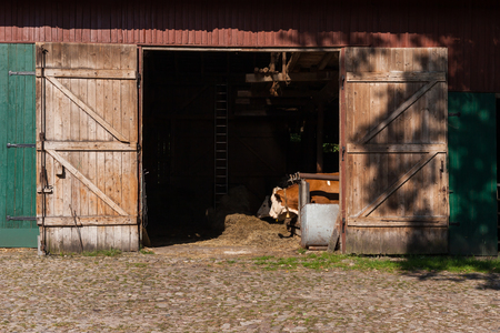 Open Barn Door With A View On Eating Cattle Stock Photo Picture And