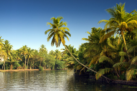 Swaying coconut trees, backwaters landscape of Alleppey, Kerala, India