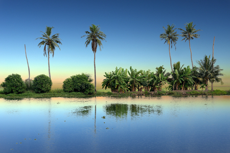 alleppey: panoramic view with Coconut trees, backwaters landscape of Alleppey, Kerala, India