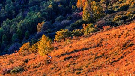 Autumn scenery view of seven Li Valley Banco de Imagens