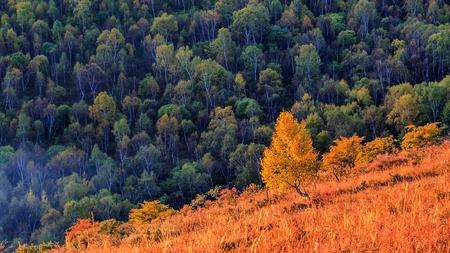 Autumn landscape scenery view of seven Li Valley