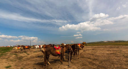Horses on Zhangbei Bashang Grassland
