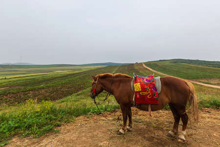 A horse on Zhangbei Bashang Grassland