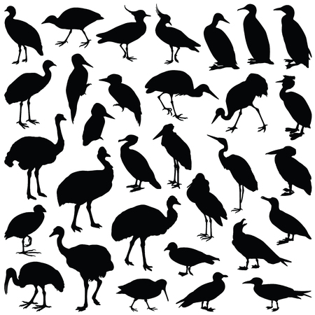 Bird collection - vector silhouette  イラスト・ベクター素材