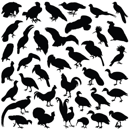Bird collection - vector silhouette Illustration