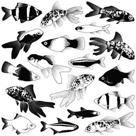Aquarium fish collection - vector silhouette illustration 向量圖像