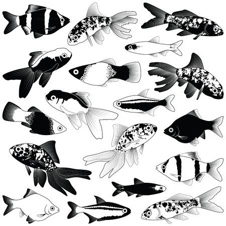 Aquarium fish collection - vector silhouette illustration Illustration