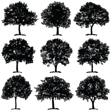 Tree collection - vector silhouette illustration