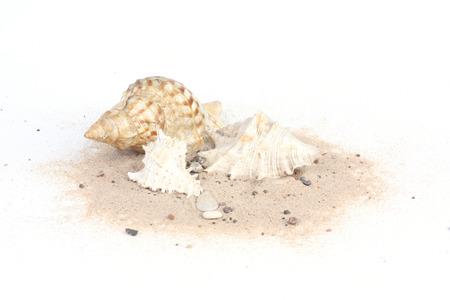 edible snail: Three seashells on sand isolated on white bakcground