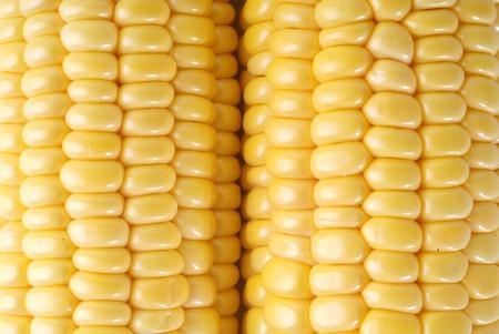 Yellow sweet corn Stock Photo - 8494511