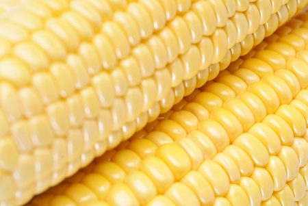 Yellow sweet corn photo