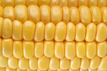 elote: Ma�z dulce amarillo