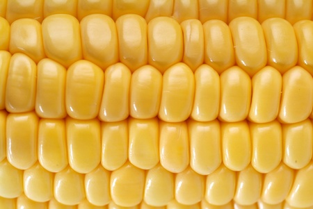 leaf close up: Yellow sweet corn