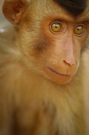 monkey face photo