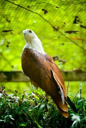 talons: eagle landing in grass