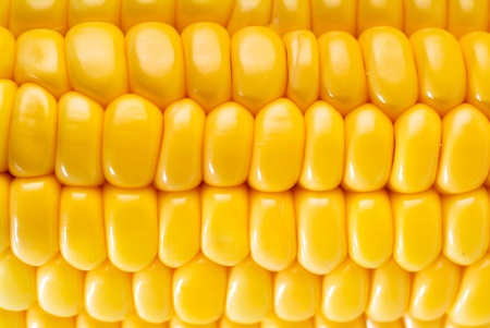 Yellow sweet corn on background photo
