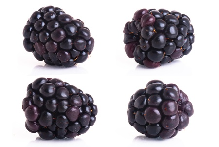 blackberry isolated on a white background photo