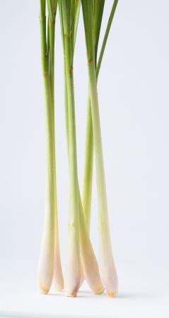 Lemon Grass. Fresh Lemon Grass on background photo