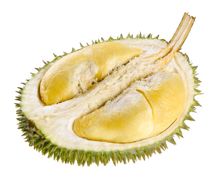 Durian fruit. Shell (husk) of the prized durian fruit.