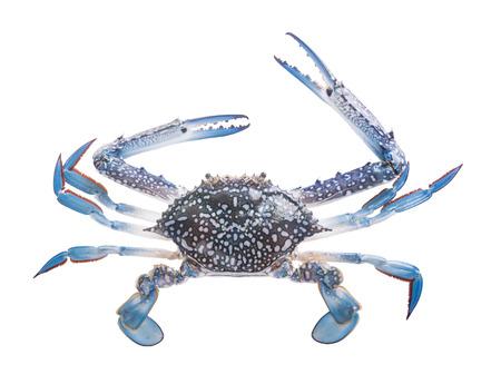 the crab: Cangrejos aislados en blanco