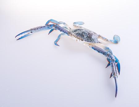 crabs. crabs on the background. crabs on the background.