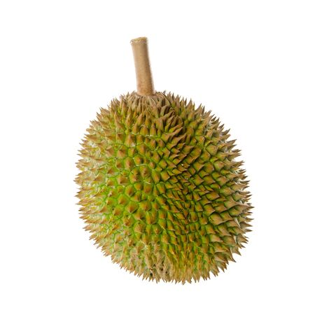 durian or durian with concept on background new 版權商用圖片