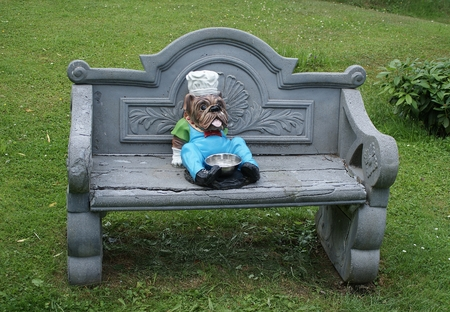 English bulldog as a cook sits on the  bench