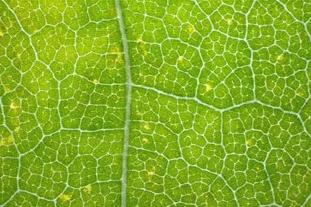 Stylized maple leaf Stock Photo