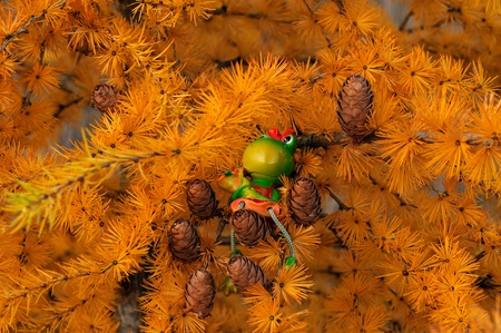 Frog Martha on Larch tree, dreaming of Christmas Stock Photo - 11232913