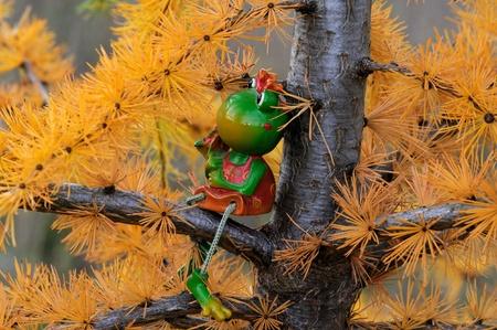 christmas frog: Frog Martha on Larch tree, dreaming of Christmas Stock Photo