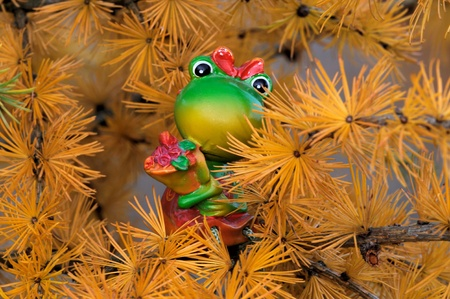 christmas frog: Frog Martha on Larch tree, dreaming of Christmas Stock Photo