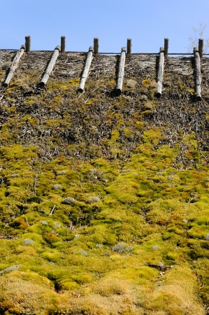 thatched roof: Old thatched roof, covered with moss, in Northern Estonia