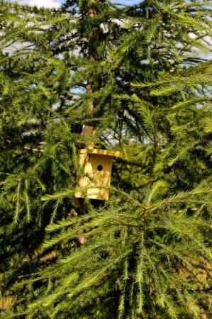 Little nest box for tomtit on larch tree Stock Photo