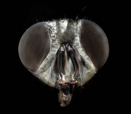 Portrait of a fly  correlative macro photography and scanning electron microscopy  Stock Photo