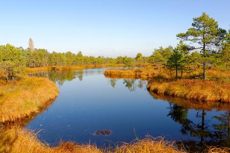 Bog-pools in Saara bog, Estonia.